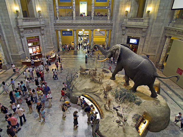 natural-history-museum-washington-dc
